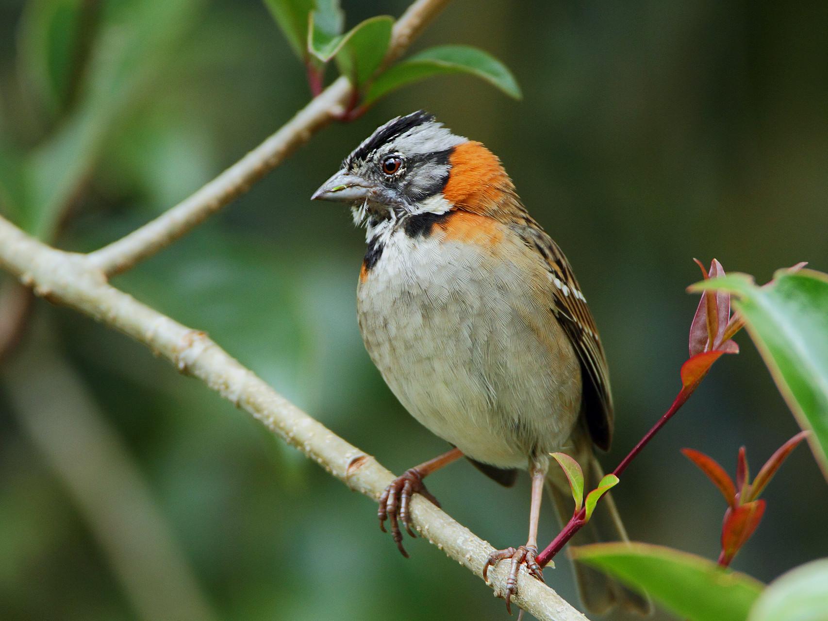 Auch zahlreiche Singvögel wie die Morgenammer...