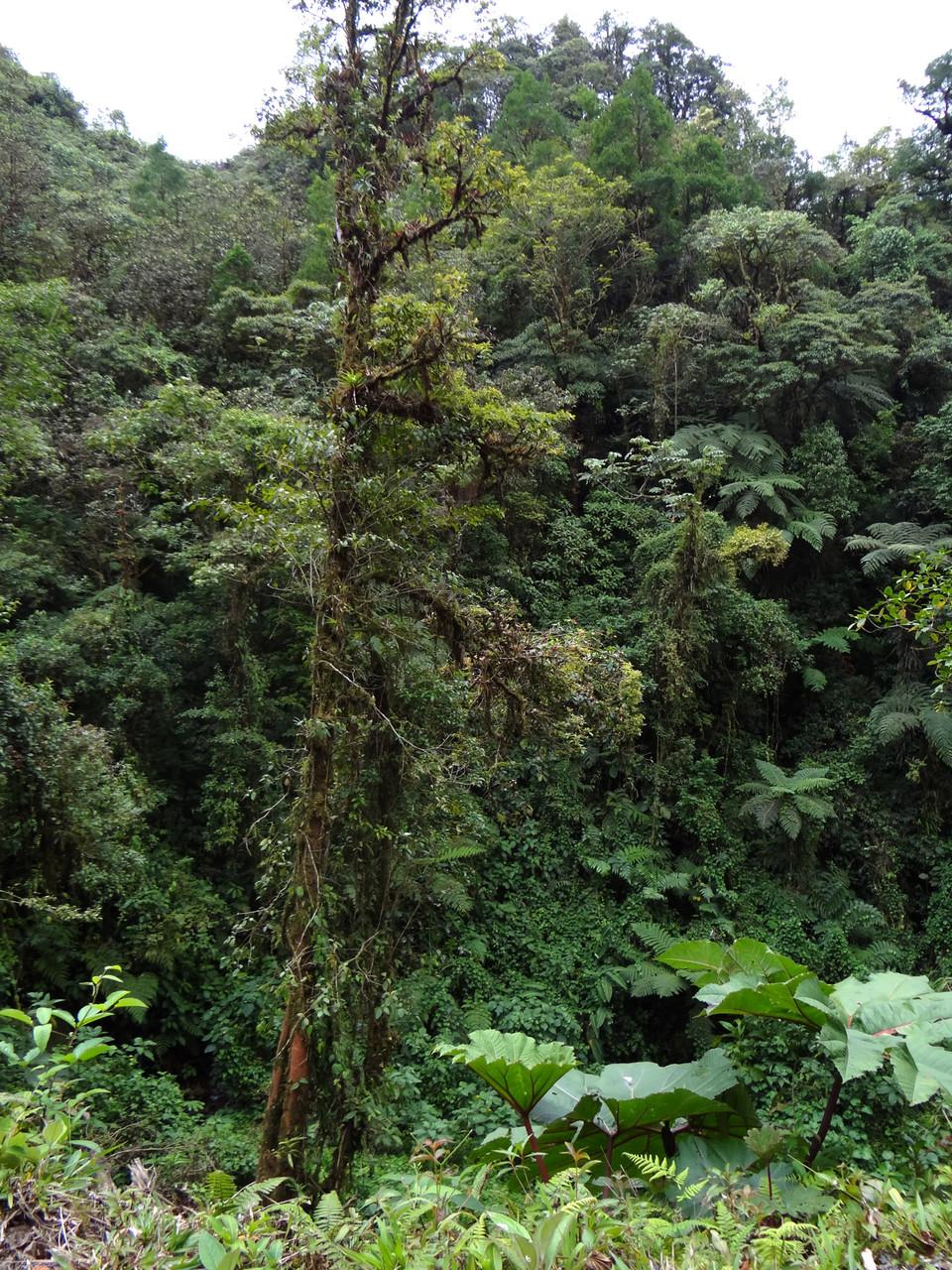 Der Braulio Carillo-Nationalpark bietet dichten Primär-Regenwald...