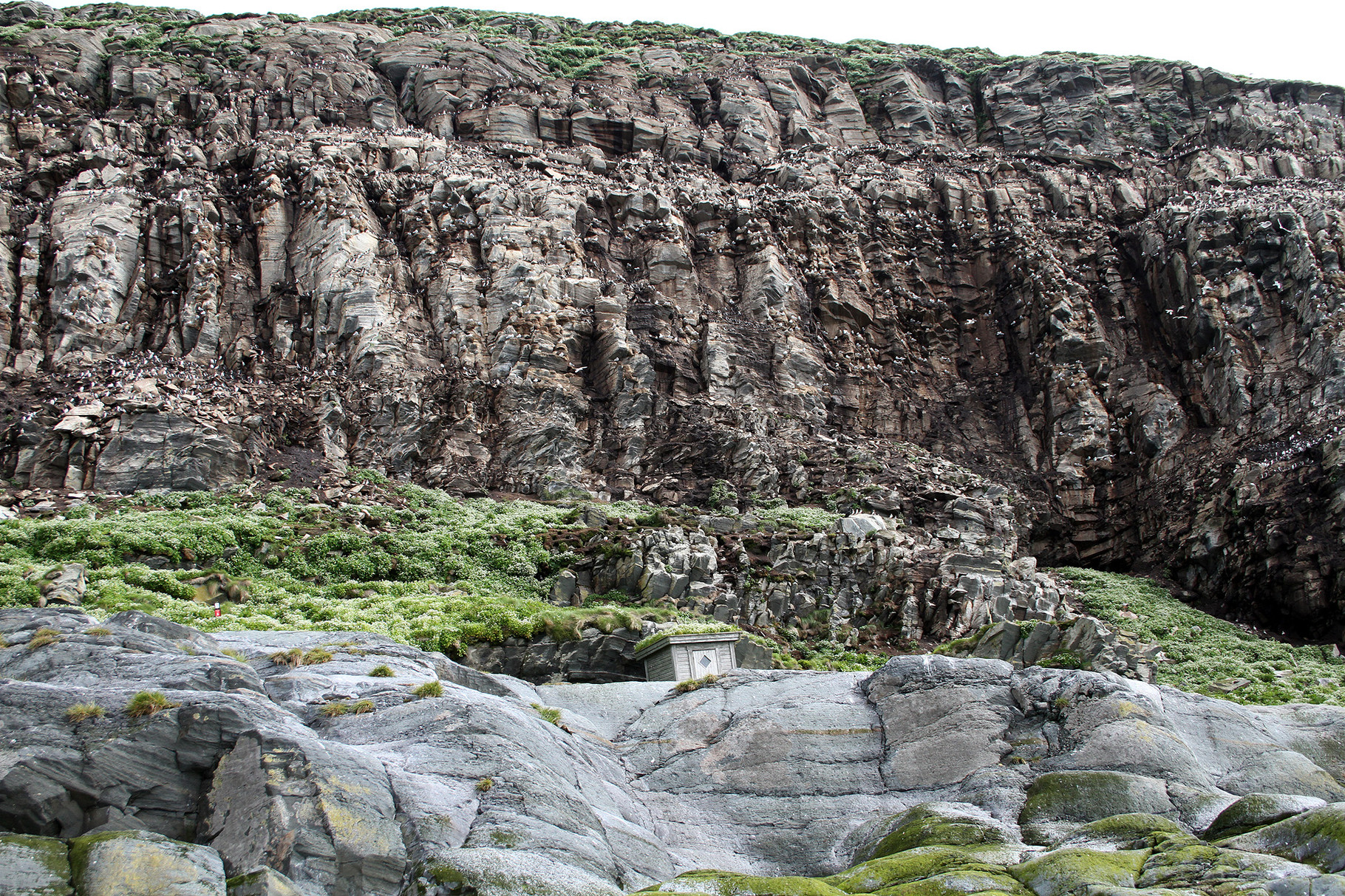 Der Besuch der Vogelinsel Hornoya bei Vardo ist ein eindrückliches Erlebnis