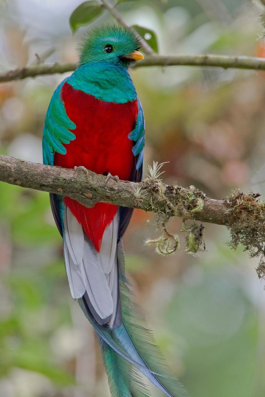 ...ist der Quetzal, der Göttervogel der Inkas
