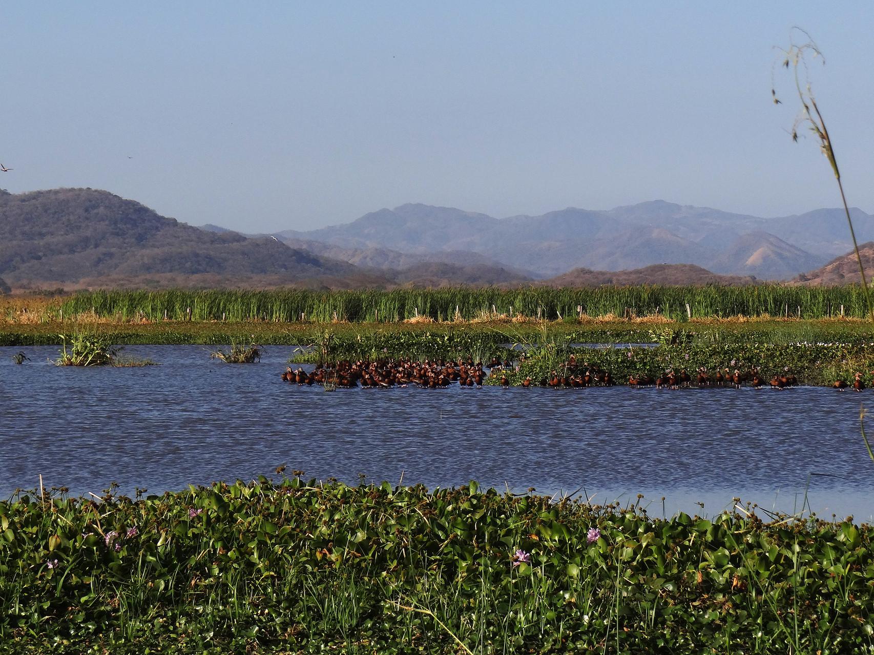 Unmittelbar vor der OTS-Forschungsstation (unserer Unterkunft) erstreckt sich eine riesige Sumpfebene...