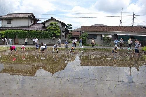 老若男女、たくさんの人たちがワイワイと苗を植えました。もちろん、木村式の苗は1本植え!