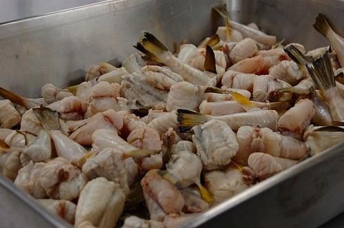 朝当日、市場から持ち込んだフグ。「奇跡の味噌」を使ったお味噌汁の具材となります