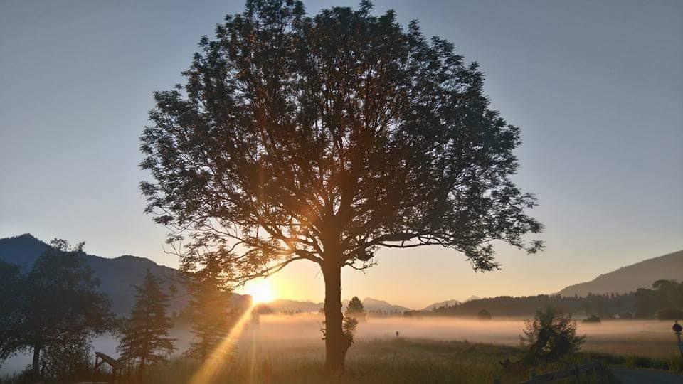 Der Baum der dich die Wurzeln spüren lässt