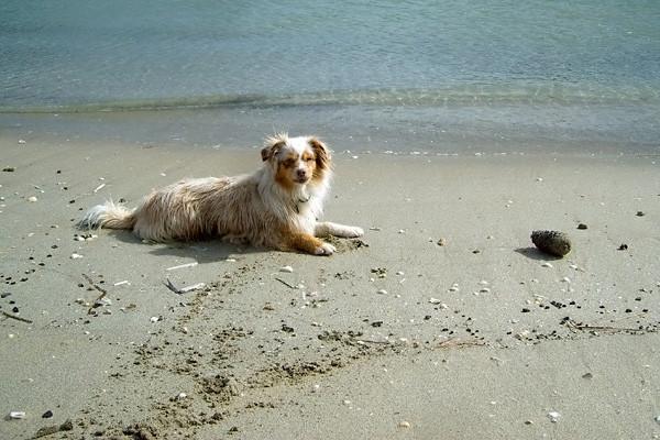 Endlich wieder am Strand!