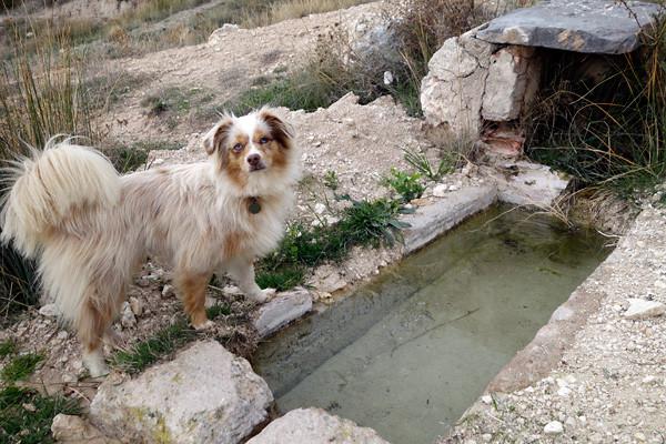 Wasserbrunnen in freier Natur. Kann ich hier baden?
