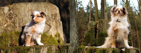 Foxi auf einem Baumstumpf in Grunewald - links Februar 2011, rechts Februar 2015