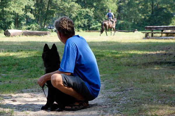 Pferdeparcour beobachten