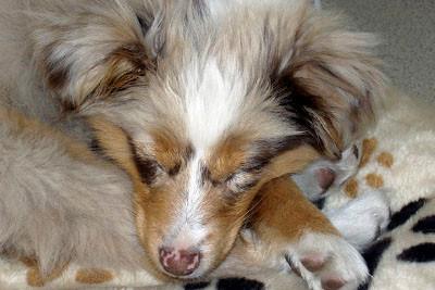 Schlafen macht gesund... Guter Schlaf ist der erste Schritt zu einer gesunden Lebensweise