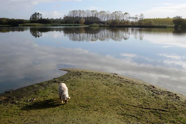 An einem Süßwassersee