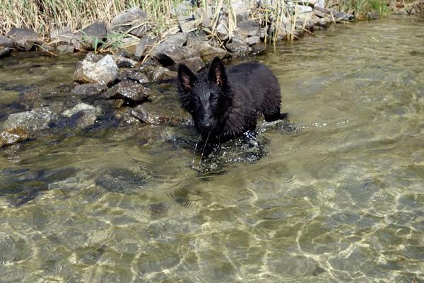 Estelles weiteres Wasser-Testen