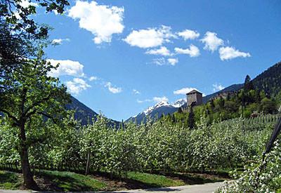 13.04.2011 -  Apfelbäume bei Völlan