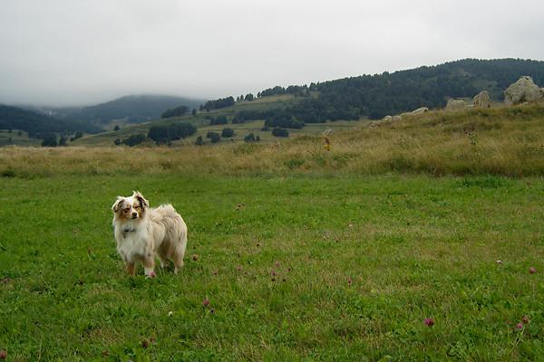 Auf einem Feld in Pyrenäen