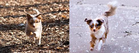 Foxis Lauf - links Februar 2011, rechts Januar 2012