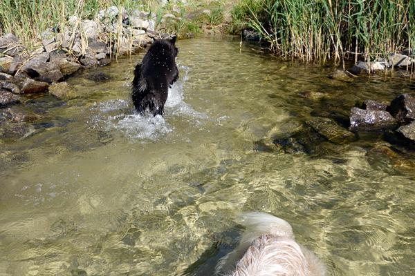 Estelle aus dem Wasser laufend