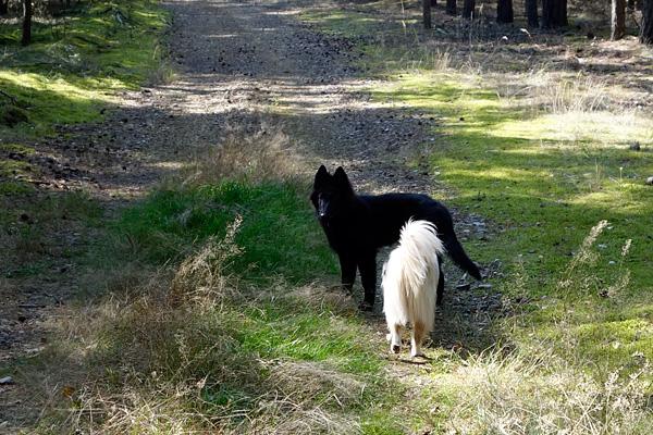 gemeinsam im Wald unterwegs