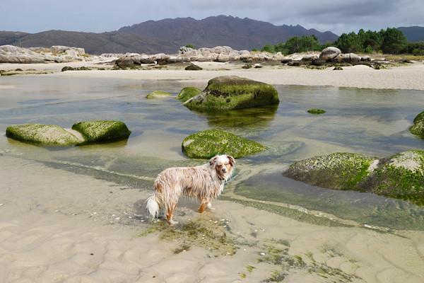 Flussmündung - Planschbecken für Foxi
