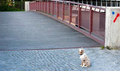 06.05.2011 - Bild wurde erst viel später gemacht und zugefügt... Hier ist Foxi schon 5 Monate alt und bereits unzählige Male über die Brücke gegangen.