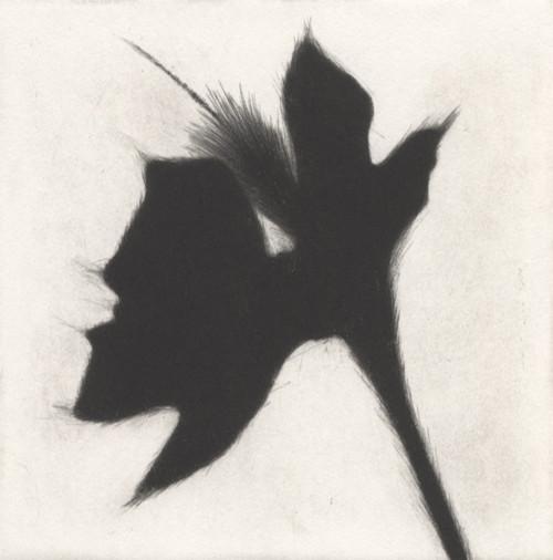 Eliana Bürgin-Lavagetti   Serie Golden Hour. Sie umfasst 5 Druckplatten. Abstrahierte Pflanzenform schwarz eingefärbt. Mezzotinto, Platte 15 x 15 cm, Blattgrösse 26,4 x 26,4 cm, Zerkall Bütten 250 g/m2. Drei Exemplare.