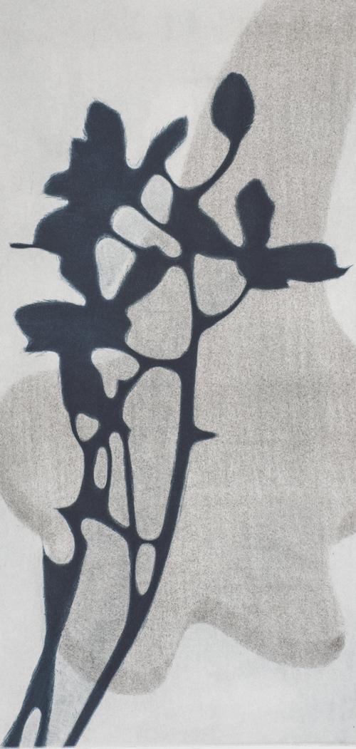 Eliana Bürgin-Lavagetti   Zusammenspiel, Mezzotinto, Roulette, Druck von zwei Kupferplatten auf Zerkall Papier, Blattgrösse 34 x 55 cm, Kupferplatte 20 x 40 cm. Zwei Exemplare.