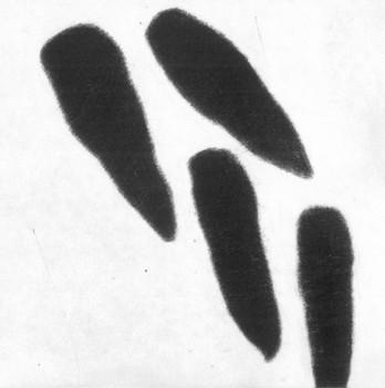 Eliana Bürgin-Lavagetti | Schnittstellen 2001/2002. Mezzotinto. Kupferplattenformat 12,5 x 12,5 cm, Blattgrösse 20 x 20 cm, Zerkall Bütten 300 g/m2.