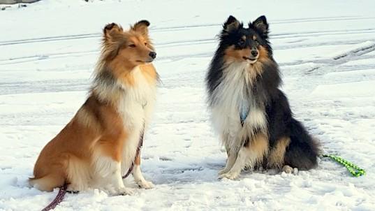 Bonny und Blacky