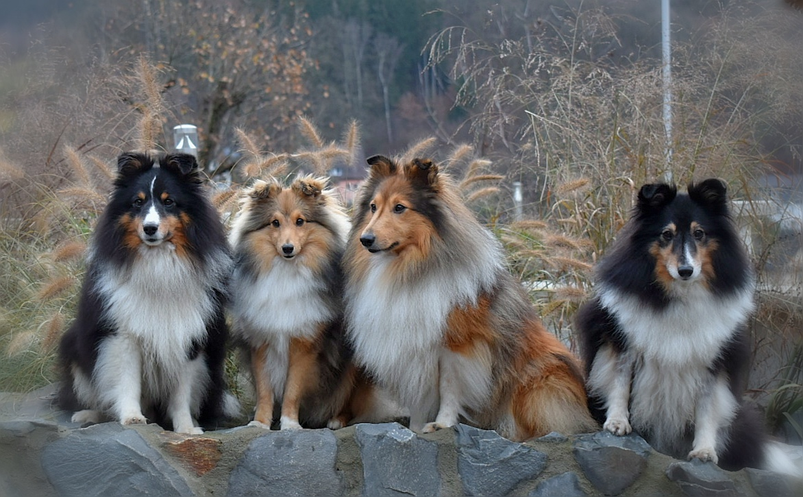 v.l.n.r.: Hakon, Ruby, Johnny und Alisa