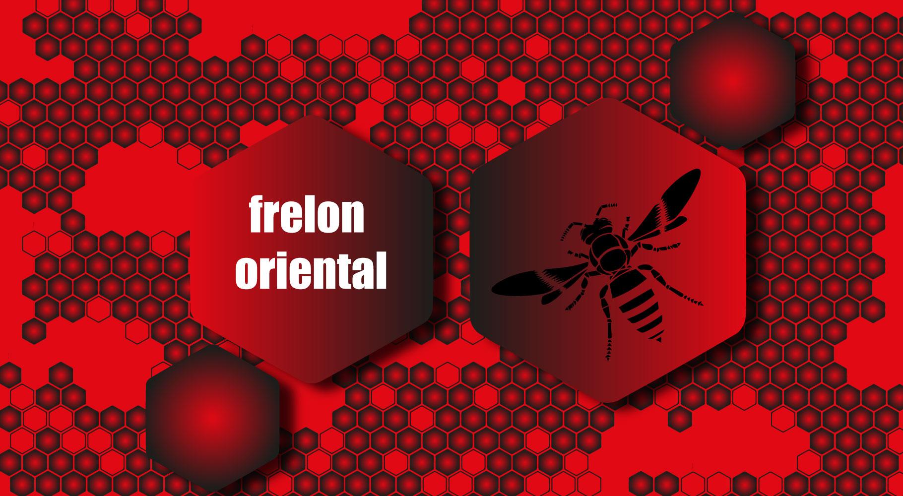 Frelon oriental