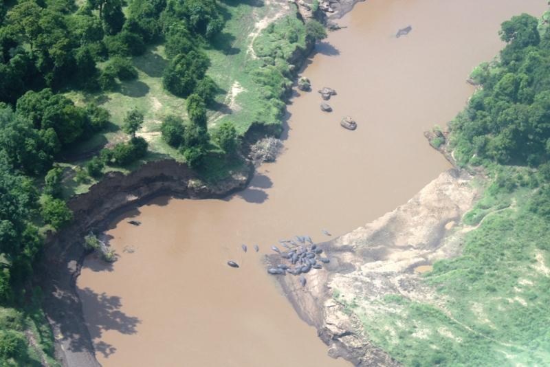 Flußpferde im Mara River