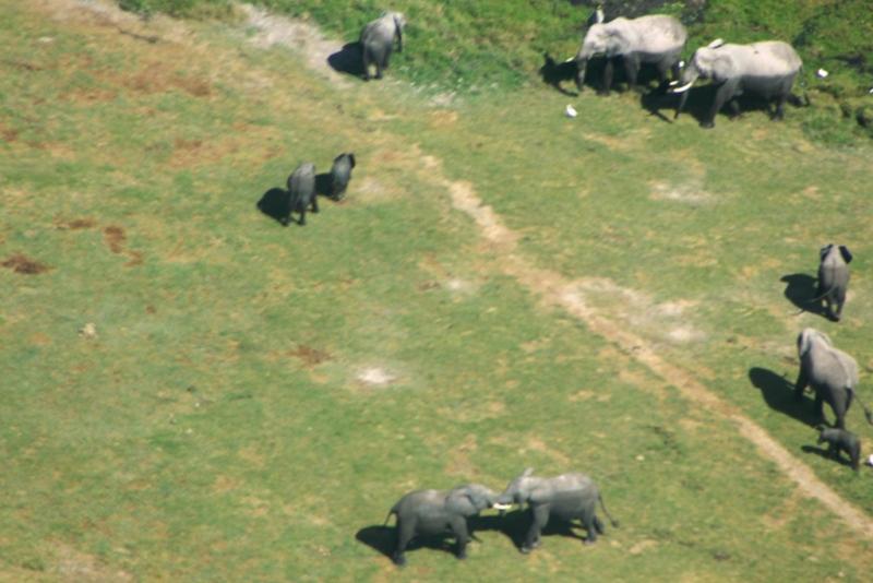 Elefanten in Amboseli NP