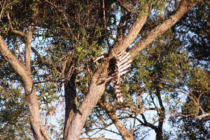 Was bei einem Leopardendinner so übrig bleibt!