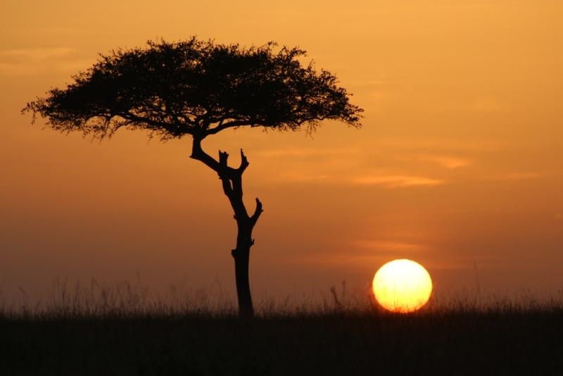 Sonnenaufgang über der Savanne