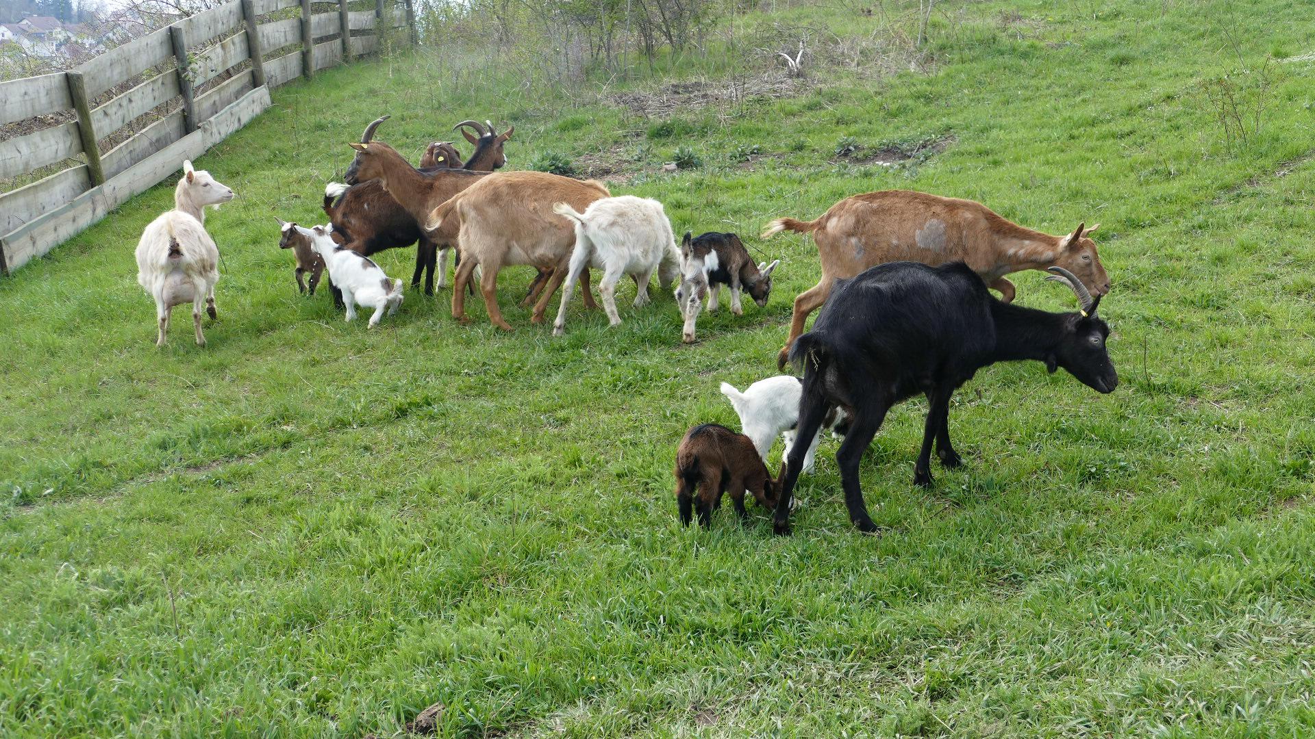 Da ist die neue Herde vom NABU Petersberg
