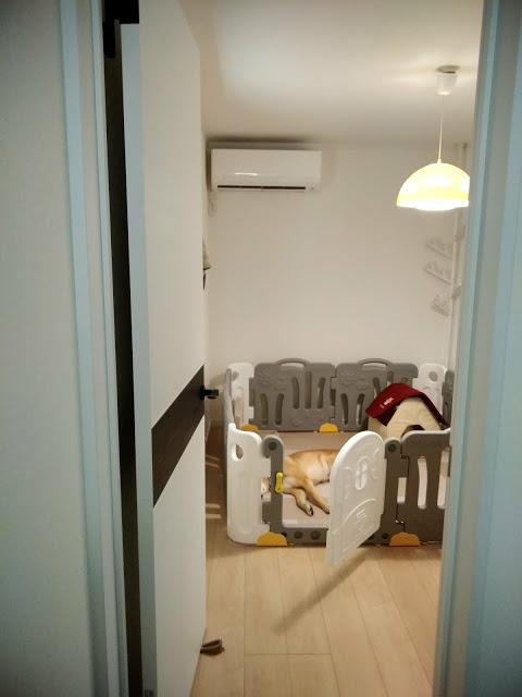お部屋入口。大きい犬が寝ても広々。