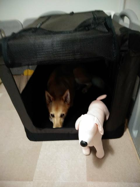 次のご予約が入っている場合の、急きょご延泊時の大型犬用簡易ケージ。6㎏以下の子ならお家として十分過ごせます。お預かりは3階寝室となります。