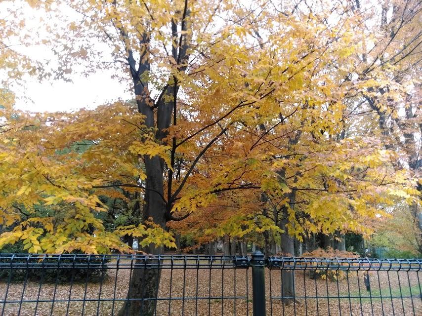 和田堀公園。