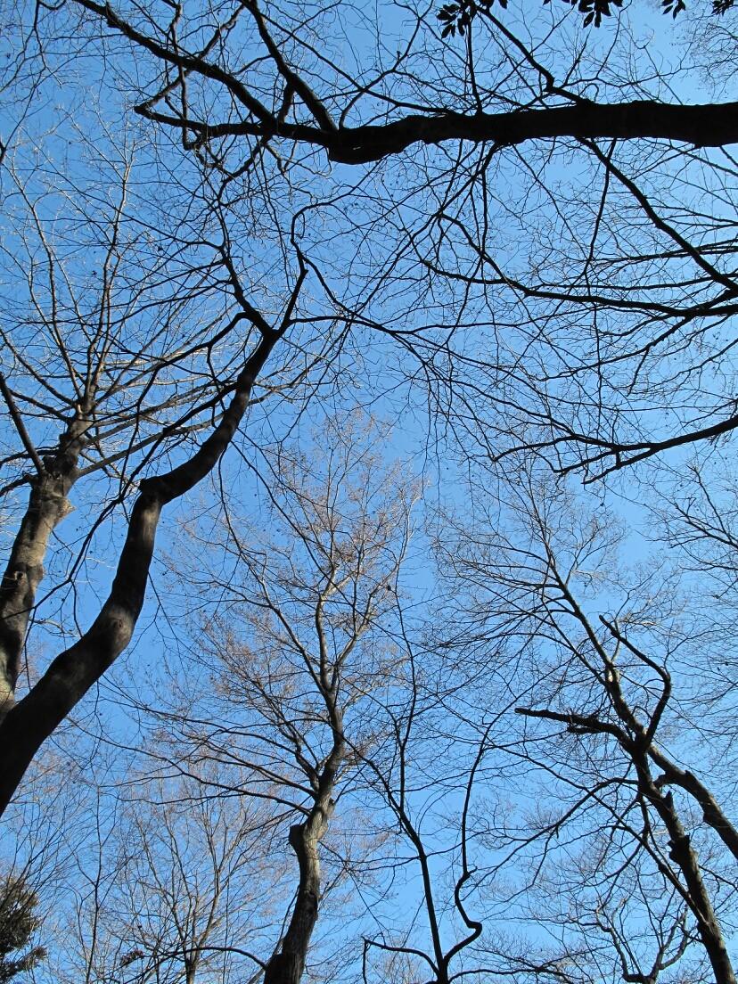◆乙女山公園 (東京都)