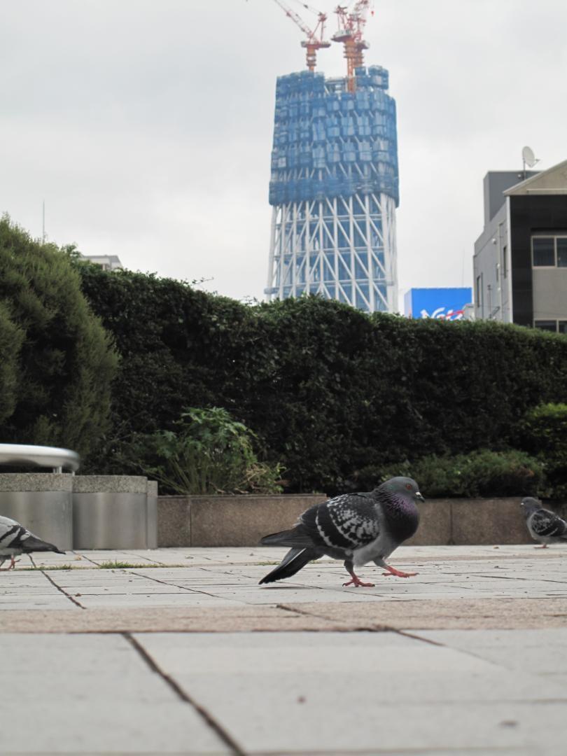 ◆東京都墨田区。