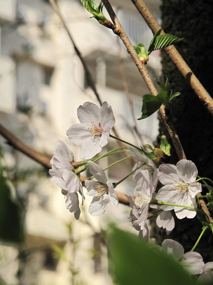 ◆新宿区戸山団地。