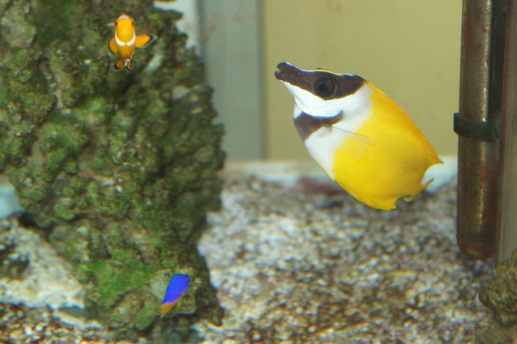 Aquarium im Wartezimmer