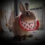 愛ウサギ「ぷん」