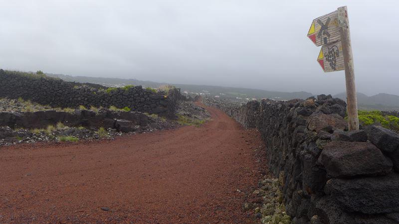 Weinanbau zwischen Lava-Steinwällen auf der Insel Pico, Azoren