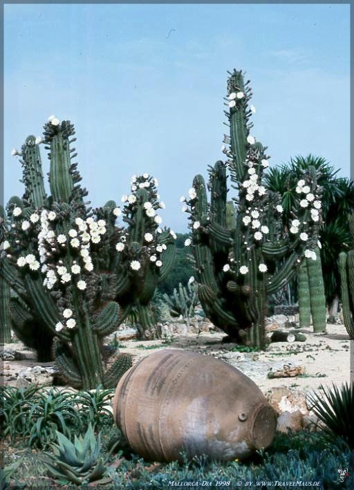 Diascan 1998- Mallorca