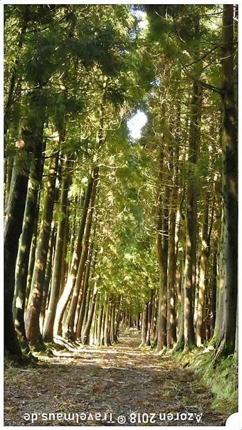 Unsere Irrfahrt zur Serra Santa Barbara - aber tolle Strecke!