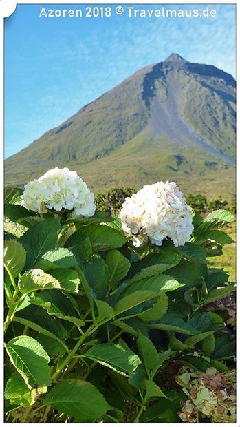 Pico - 2350 m