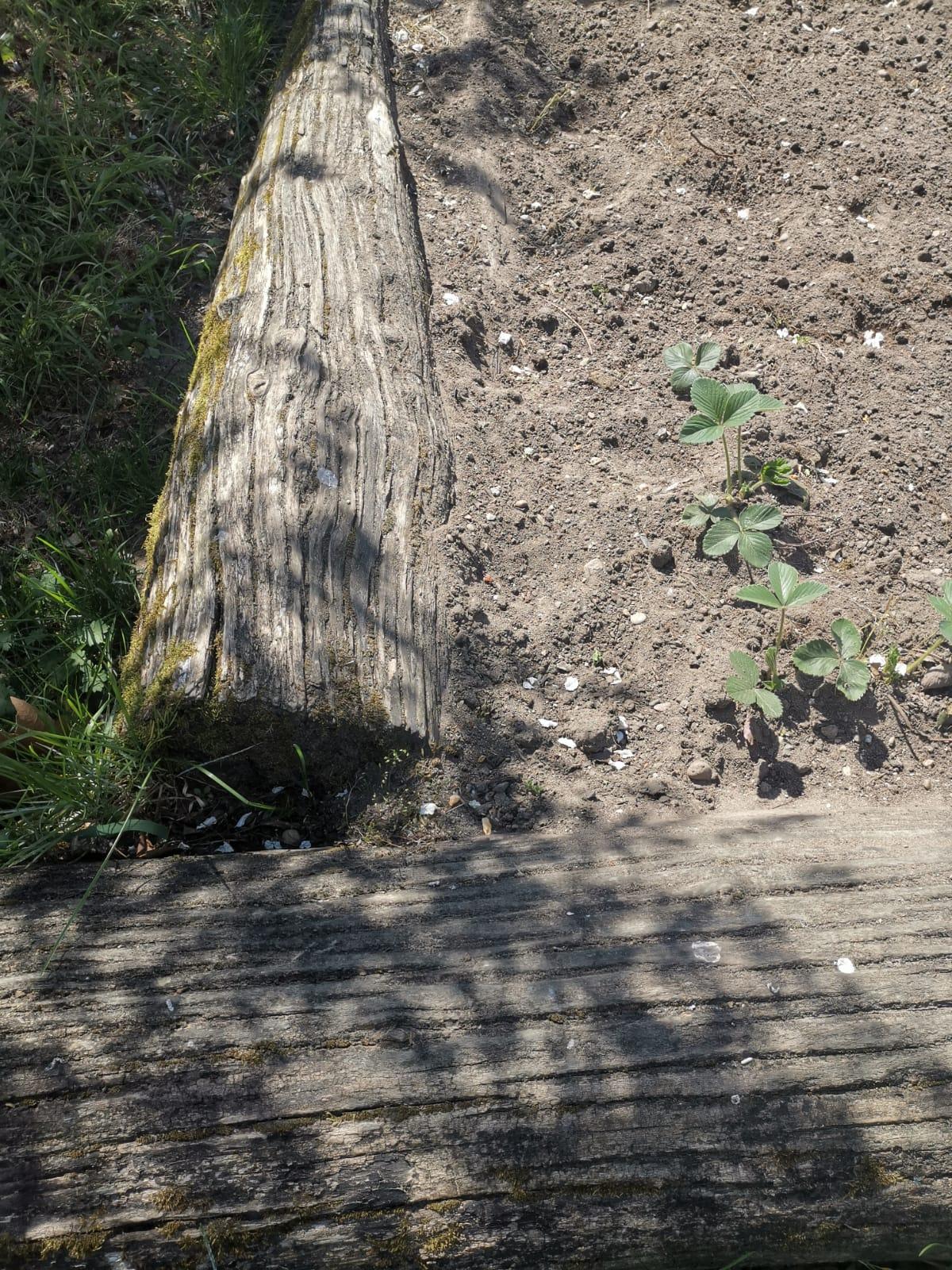 Das Beet im Garten
