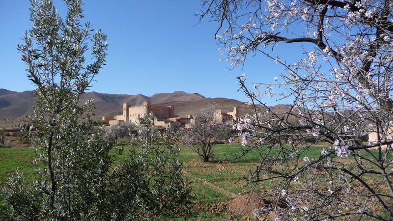 30/01/2009 Un mélange d'olivier, d'Arganier à Taliouine