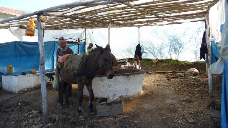 18/02/2009 Fabrication de l'huile d'olive entre Meknès et Chefchaouen