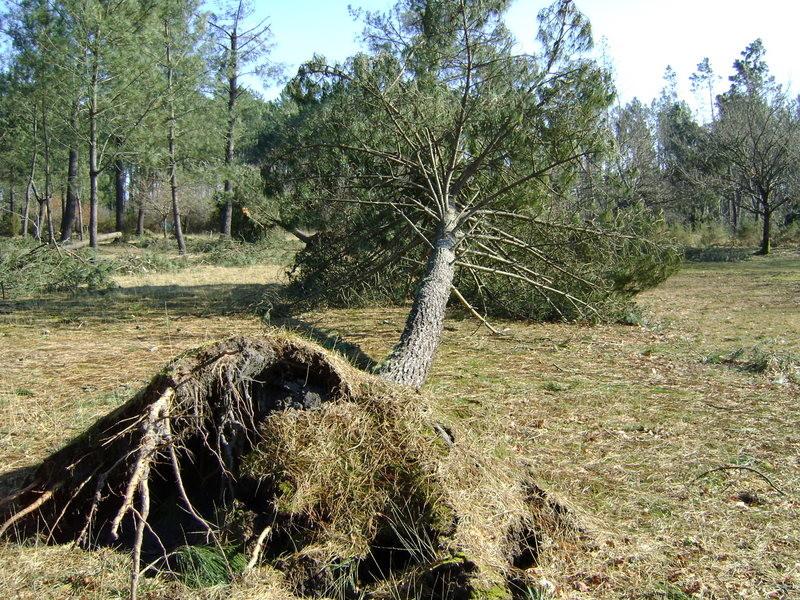 01/03/2009 Image de désastre en traversant les Landes