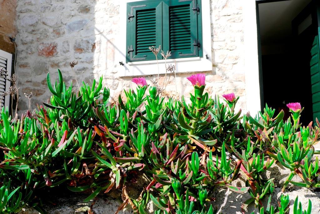 Garten mit Blick zum Schlafzimmerfenster unten